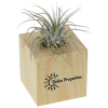 View the Air Plant