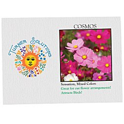 View a larger, more detailed picture of the Impression Series Seed Packet - Cosmos