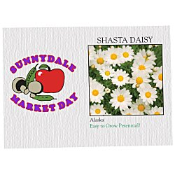 View a larger, more detailed picture of the Impression Series Seed Packet - Shasta Daisy