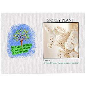 Impression Series Seed Packet - Money Plant