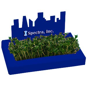 City Line Sprout Box Main Image