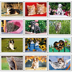 Puppies & Kittens Calendar - Pocket Image 1 of 2