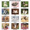 Puppies & Kittens Calendar - Stapled - 24 hr Image 1 of 1