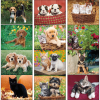 View Extra Image 1 of 1 of Puppies & Kittens Calendar - Stapled