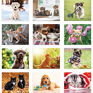 Paws - Puppies & Kittens Calendar - Stapled Image 1 of 1