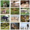 View Image 2 of 2 of Wildlife Calendar - Stapled