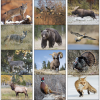 Wildlife Portraits Calendar - Stapled Image 1 of 1