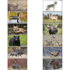 North American Wildlife Large Wall Calendar Image 1 of 2