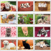 View Extra Image 4 of 4 of Puppies & Kittens Desk Calendar
