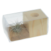 View Extra Image 1 of 1 of Air Plant